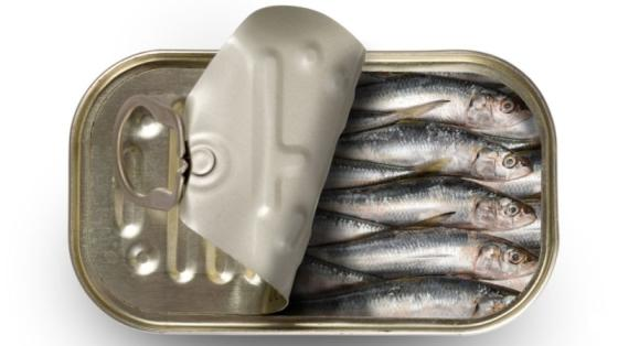 Sell Morocco canned sardines in oil 125g fish in can