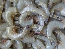 Wholesale frozen shrimps: Frozen Shrimps