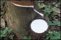 Natural Ha Latex Rubber