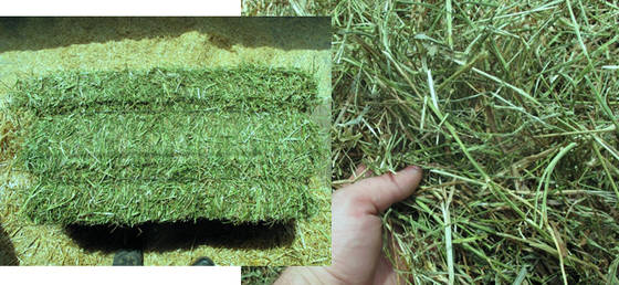 Sell Alfalfa Hay In 2 String Bales