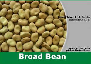 Wholesale canned broad beans: Broad Beans