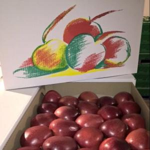 Wholesale apple: Medine Fresh Apples for Sale