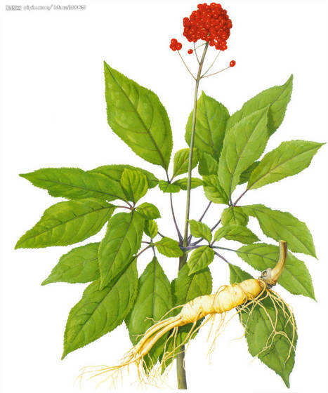 Sell ginseng berry extract