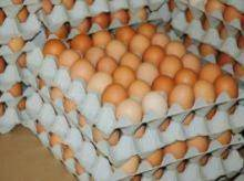 Wholesale table: Fresh Chicken Table Eggs Brown and White Shell Chicken Eggs