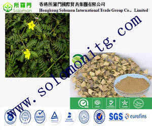Wholesale metal tower packing: Tribulus Terrestris Extract High Quality Pure & 100% Natural Natural Herb Sex Enhancer