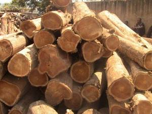 Wholesale zebrano: Teak Wood