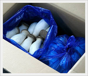 Wholesale king oyster eryngii mushroom: King Oyster Mushrooms (Also Known As Eryngii)