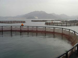 Wholesale fish farm: High Quality Floating Fish Cage for Deep Sea Fish Farming