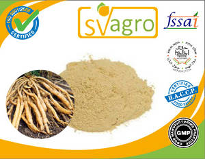 Wholesale bitter melon powder suppliers: Shatavari 100% Real Asparagus Racemosus Root