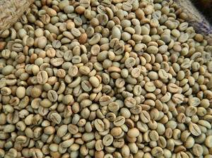Wholesale w: Vietnam Robusta Green Coffee Beans