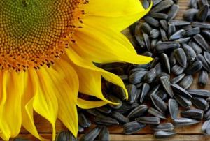Wholesale flower: Sunflower Seeds, Sunflower Oil, Sun Flower Seeds