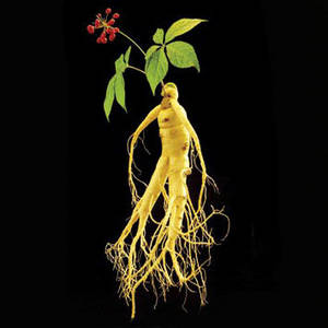 Wholesale ginseng roots: Ginseng Root Extract