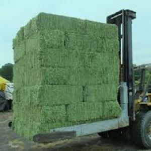 Wholesale alfalfa hay: Alfafa Hay for Animal Feeding Stuff Alfalfa
