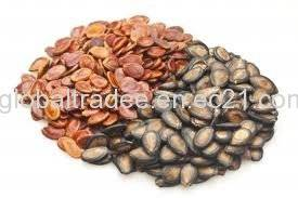 Wholesale vegetable seeds: Vegetable Seeds, Soybean Seeds, Sunflower Seeds
