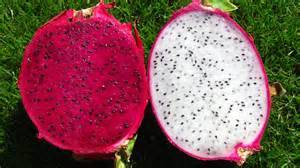 Wholesale fresh red dragon fruit: Sell Fresh Red Dragon Fruits