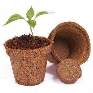 Wholesale tree seedling: Coir Pots Small Round