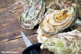Wholesale king oyster: King Oysters,Coffin Bay King Oysters