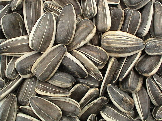 Sell Sunflower Seeds for Animal feed
