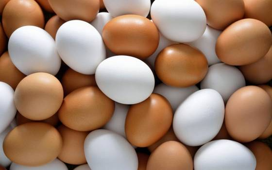 Sell Fresh Chicken Brown and White Eggs