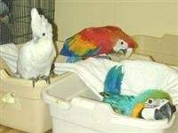 Wholesale bird incubator: Fresh Eggs and Talking Parrots for Sale
