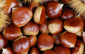 Wholesale Chestnuts: High Quality Chestnuts