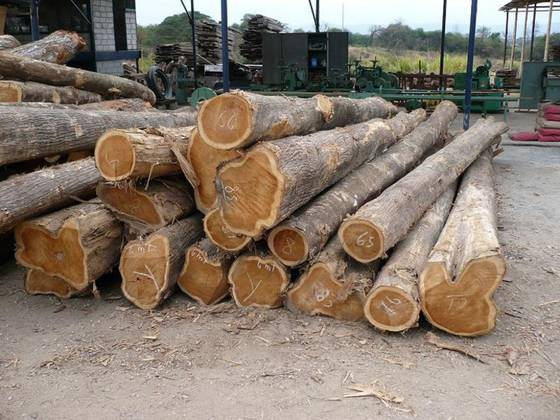 timber floor: Sell SAWN LUMBERS and TIMBER LOGS  OF ALL TYPES FOR SALE
