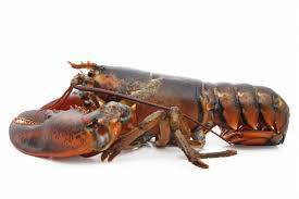 Wholesale lobster: Live Lobster