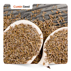 Wholesale herbal oil: Cumin Seed