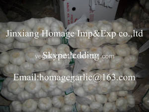 Wholesale fresh white garlic: Fresh Onion Pure White Garlic