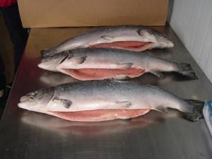 Sell Premium Salmon both whole and pieces