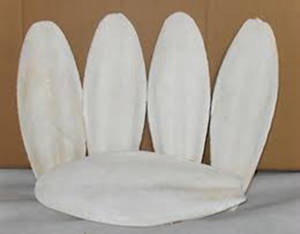 Wholesale amino acids carbon: Cuttlefish Bone - Great Feed for Bird and Poultry