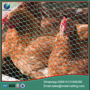 Wholesale Saws: chicken wire mesh hexagonal wire netting