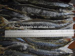 Wholesale fresh scomber japonicus: Taiwan Land Frozen Pacific Mackerel 20/25 PCS & 400/500 Gram Scomber Japonicus