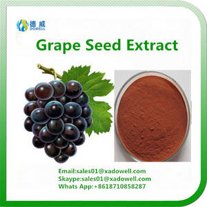 Wholesale healthy wine: Hot Selling Grape Seed Extract OPC 95%