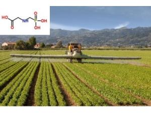 Wholesale catalyst: Activated Carbon Catalyst for Glyphosate Synthesis