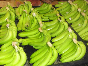 Wholesale banana: FRESH CAVENDISH BANANA for Export