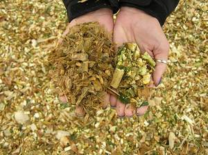 Wholesale animal feed: Pineapple Silage for Animal Feed