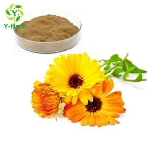 Wholesale tea seed oil: 10:1 50:1 100:1 Pure Natural Calendula Officinalis Extract