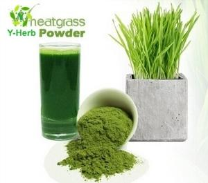 Wholesale concentrated juice: 100% Water Soluble Juice Concentrate Wheat Grass Powder