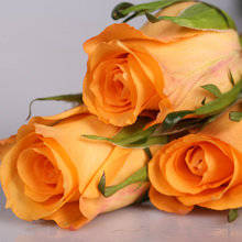 Wholesale Fresh Cut Flowers: Fresh Cut Flowers-Holiday Princess-Orange Rose
