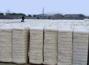 Wholesale raw cotton: Grade A Raw Cotton in Bales for Sale