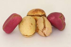 Wholesale Other Nuts & Kernels: kola Nuts