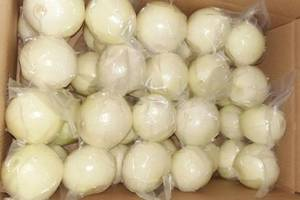 Wholesale fresh onion: Fresh Onion Vacuum Peeled