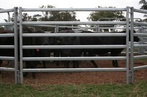 Wholesale livestock panels: Livestock Fence